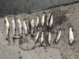 TWRA Cites White County Angler with Illegal Fishing on Caney Fork River
