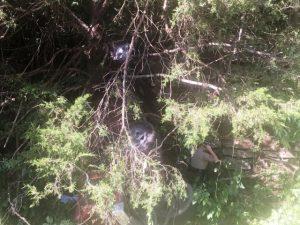 State Trooper Surveys Scene of Fatal Pickup Truck Crash