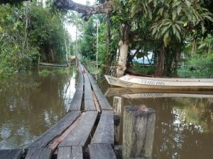 This is a picture of the plank bridge that my classmates and I had to traverse every night to come down to Dona Arlete's house which was on the Amazon River in Gurupa Miri. It was very rickety and had several broken, water-logged planks that stretched for several hundred yards up and down the river connecting the town to the other people living on the water. This is also the swimming hole where we would all swim in the evenings to cool off after a long, hot day at the excavation site.