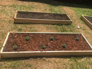 Outdoor Learning Space and Garden