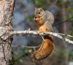 Tennessee's Free Hunting Day Set for Saturday, Squirrel Season to Open