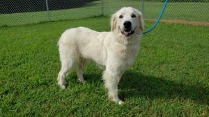 """""""Gracie"""" is the WJLE/DeKalb Animal Coalition featured """"Pet of the Week"""""""