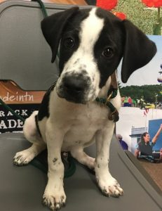 "Every family deserves a pet like ""Liam"". This week's WJLE/DeKalb Animal Coalition featured ""Pet of the Week"" is waiting at the shelter for you to take him home."