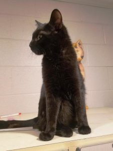 """Longtime Animal Shelter Dweller """"Louie"""" Needs a Home in Time for the Holidays"""