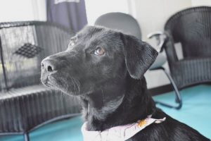 """""""Camilla"""" Shines in the Spotlight as the WJLE/DeKalb Animal Shelter Featured """"Pet of the Week"""""""
