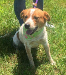 "Meet ""Miranda"" the WJLE/DeKalb Animal Shelter Featured Pet of the Week"